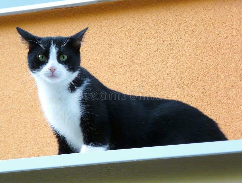 Zwart-witte kat die zich bovenop een richel bevinden stock foto's