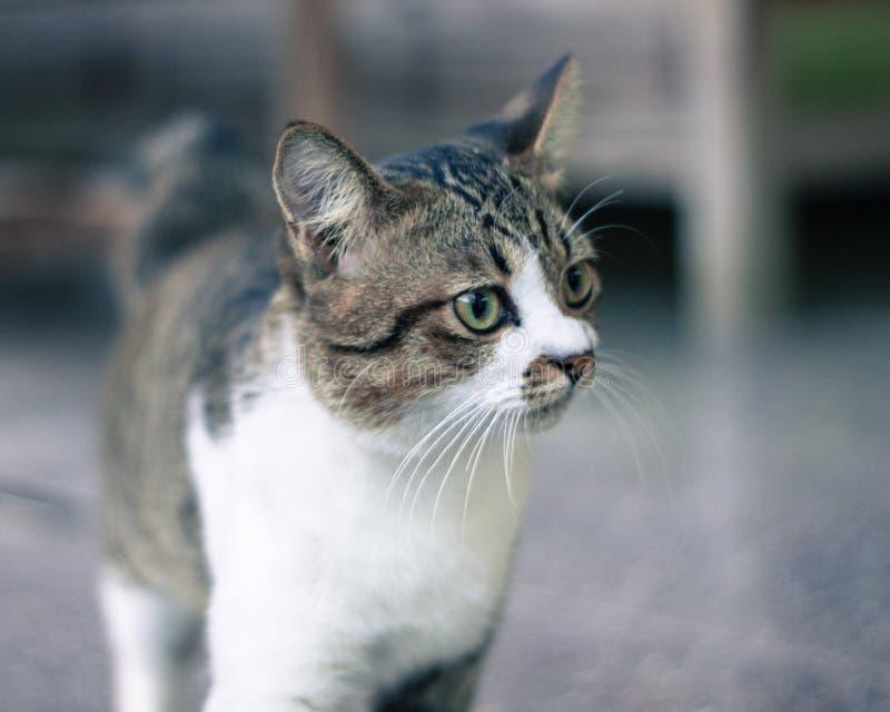 Zwart-witte kat met uitdrukking royalty-vrije stock fotografie