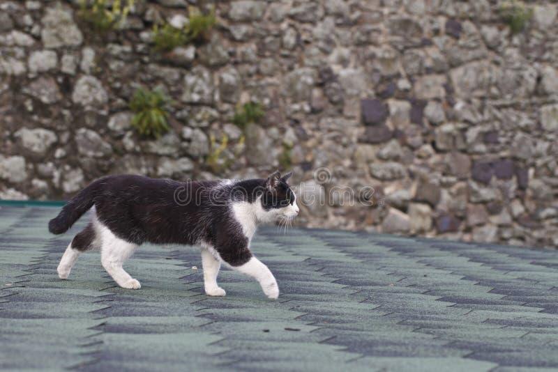 Zwart-witte kat op het dak stock afbeelding
