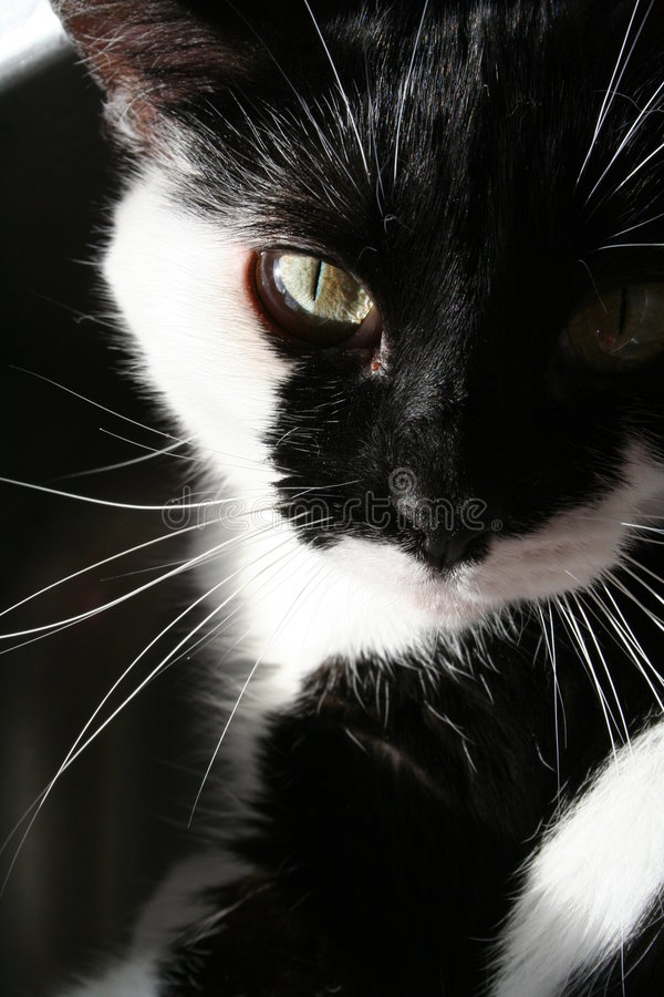Zwart-witte kat in zon royalty-vrije stock afbeeldingen