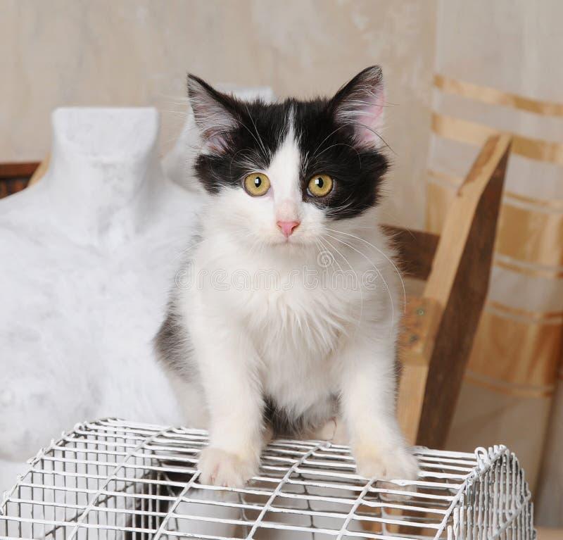 Zwart-witte kattenzitting op een vogelkooi in retro binnenland royalty-vrije stock fotografie