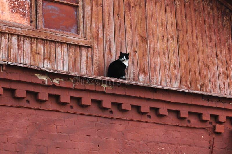 Zwart-witte kattenzitting op het rode houten gebouw Kat op het buitenhuis stock foto