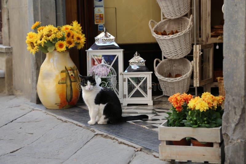 Zwart-witte kattenzitting vreedzaam in de deuropening van een Cortona-decorwinkel Witte gele en oranje bloemen in een houten mand royalty-vrije stock foto's