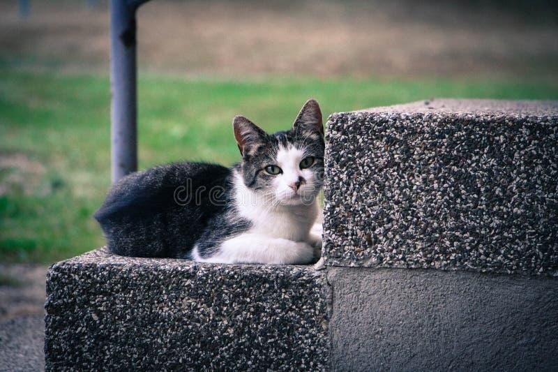 Zwart-witte Kitten Lying op Gray Concrete Stair stock fotografie