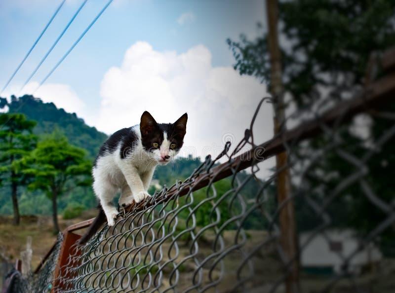 Zwart-witte leuke kat die op de omheining in de tuin bij bergen zeer grappige kat lopen stock foto's
