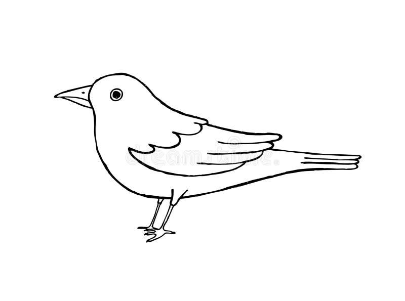 Zwart-witte merel stock illustratie
