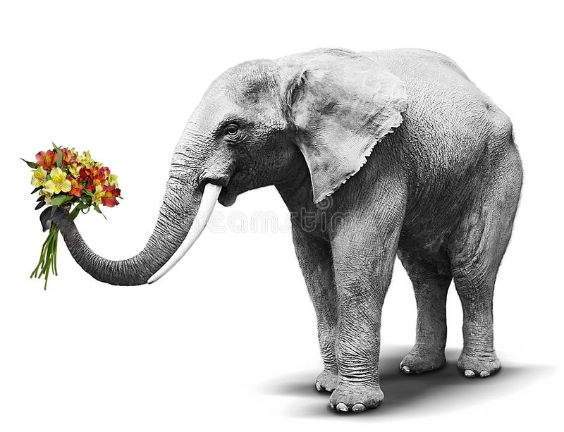 Zwart-witte olifant die een kleurrijk boeket van het bloeien overhandigen royalty-vrije stock fotografie
