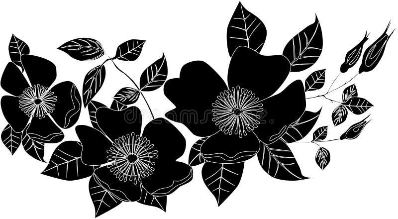 Zwart-witte papaverbloemen royalty-vrije illustratie