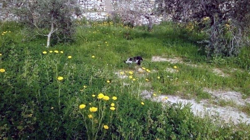 zwart-witte richels op het groene gras royalty-vrije stock afbeeldingen