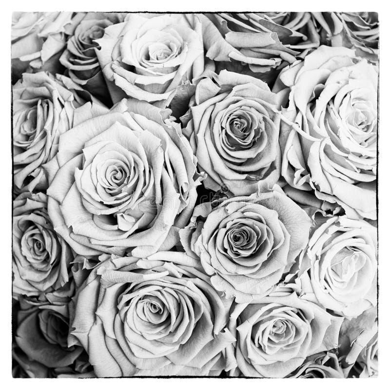 Zwart-witte rozenprentbriefkaar in vierkant royalty-vrije stock afbeelding