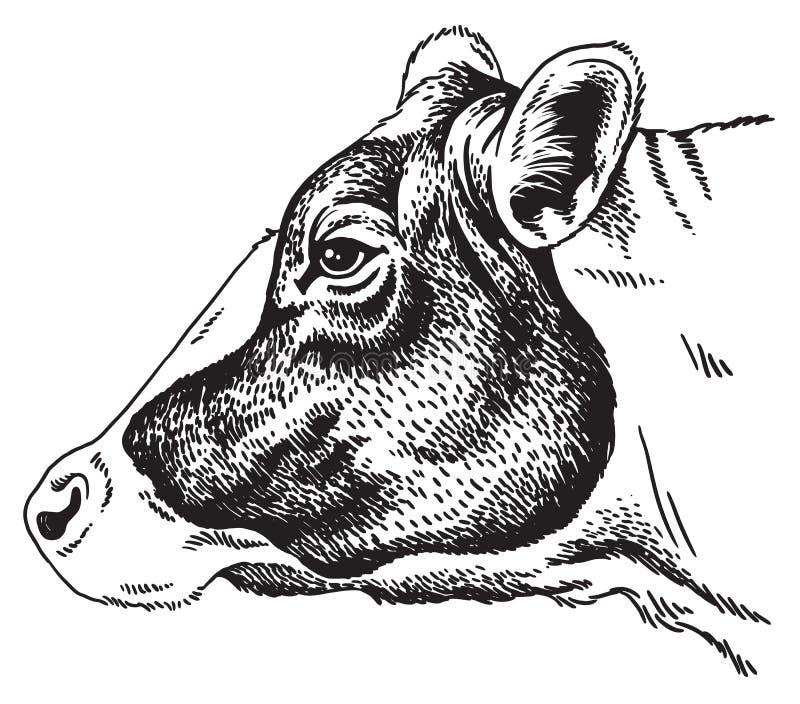 Zwart-witte schets van het gezicht van een koe royalty-vrije illustratie