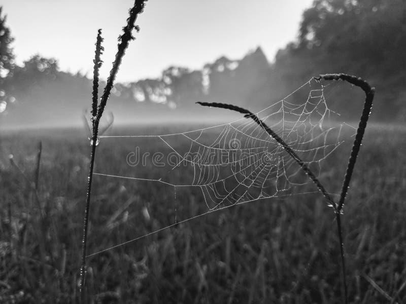 Zwart-witte spinneweb mistige ochtend royalty-vrije stock afbeeldingen