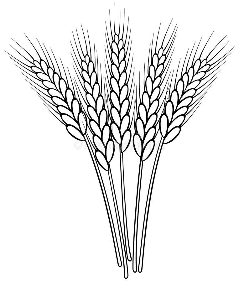 Zwart-witte tarweoren stock illustratie