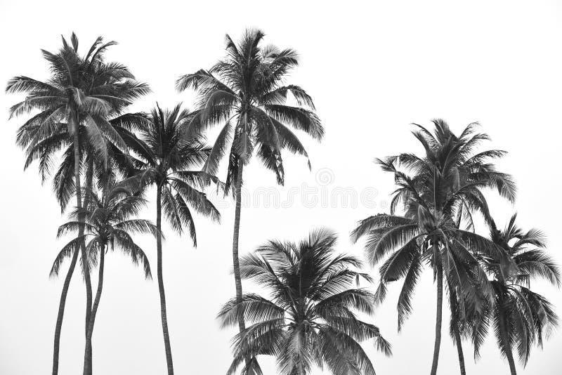 Zwart-witte tropische palmen stock afbeelding