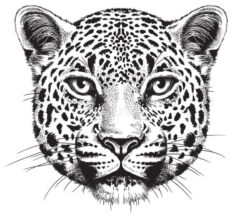 Zwart-witte vectorschets van het gezicht van een luipaard vector illustratie