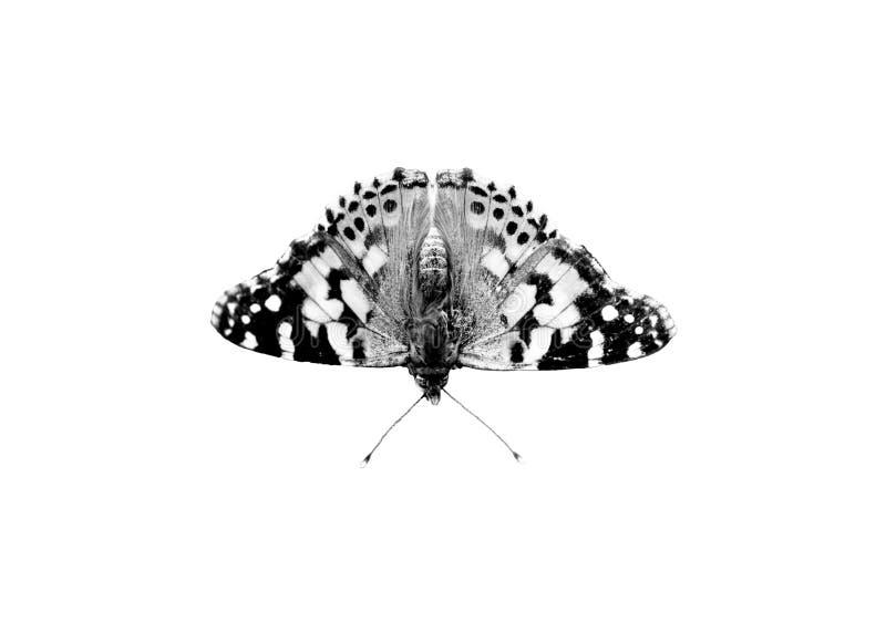 Zwart-witte vlinder royalty-vrije stock fotografie