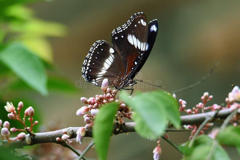Zwart-witte vlinder op groene bloemen royalty-vrije stock foto