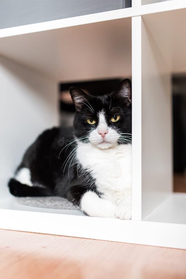 Zwart-witte volwassen vrouwelijke kat in een kabinet stock foto's