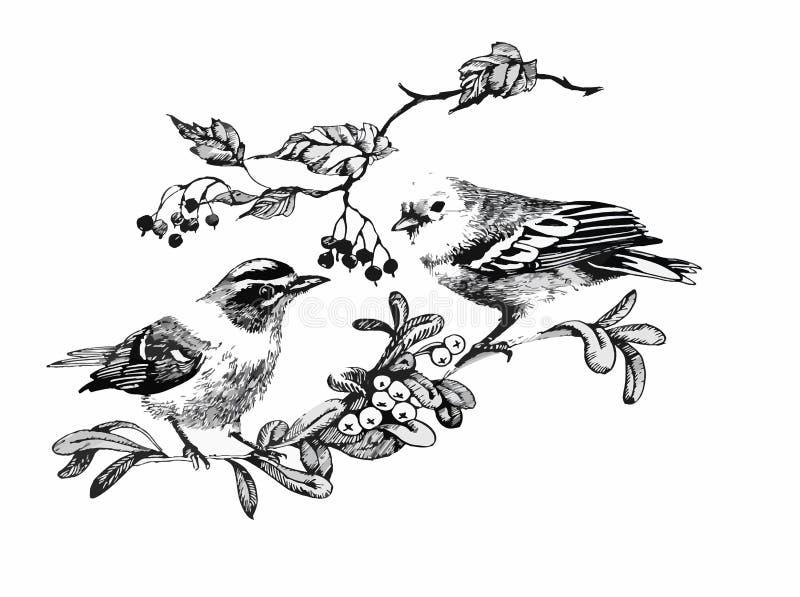 Zwart-witte waterverfillustratie van vogel op takje vector illustratie