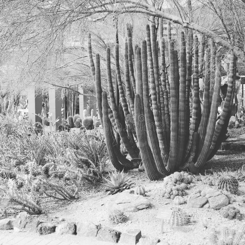 Zwart-witte woestijn royalty-vrije stock fotografie