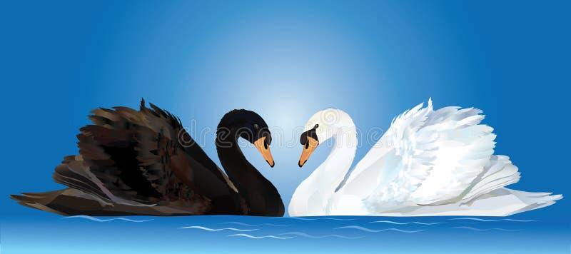 Zwart-witte zwanen vector illustratie