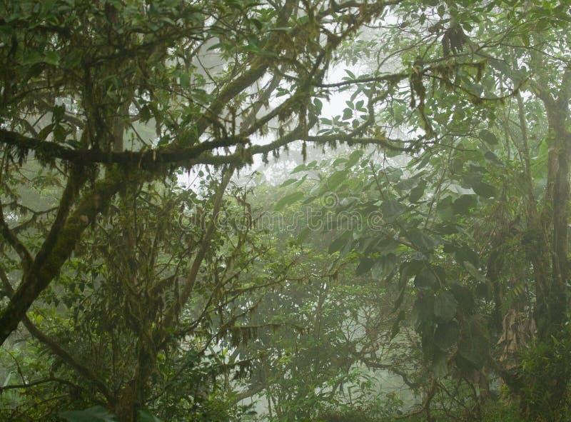 Zwarta Tropikalna dżungla zdjęcia royalty free