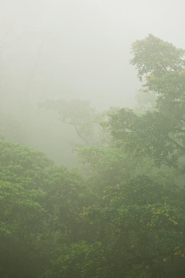 Zwarta Tropikalna dżungla w mgle zdjęcia stock
