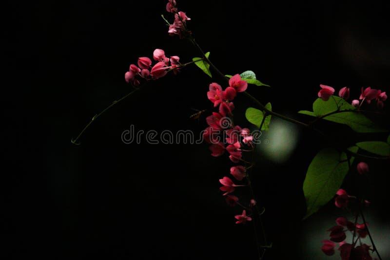 Zwarte achtergrond met roze bloemen stock fotografie