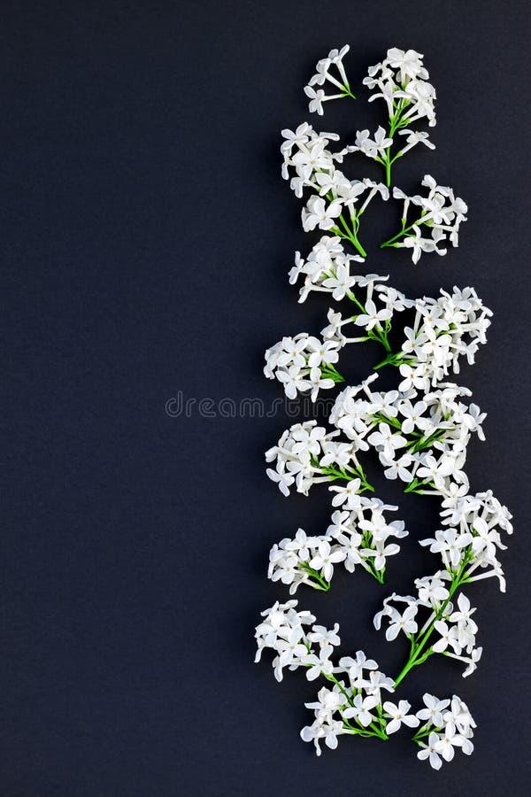 Zwarte achtergrond met witte lilac bloemen stock foto