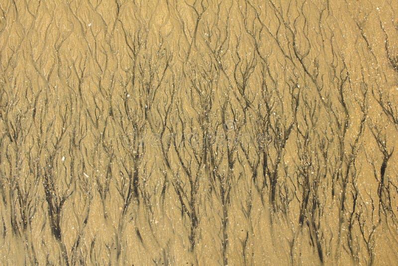 Zwarte bedden van stromen op het gele zand met kleine stenen en fragmenten van shells natuurlijke oppervlaktetextuur stock foto's