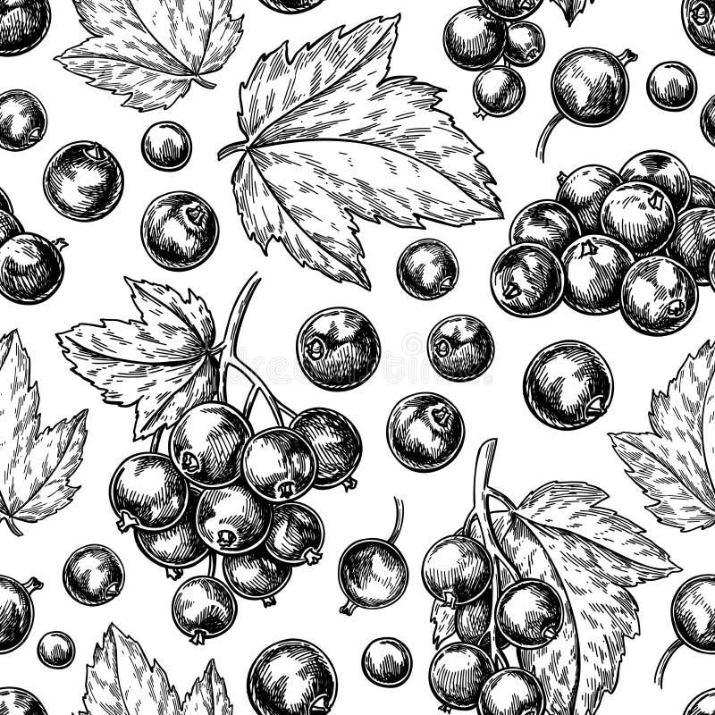Zwarte bes naadloos patroon Vector tekening De geïsoleerde schets van de bessentak op witte achtergrond royalty-vrije illustratie