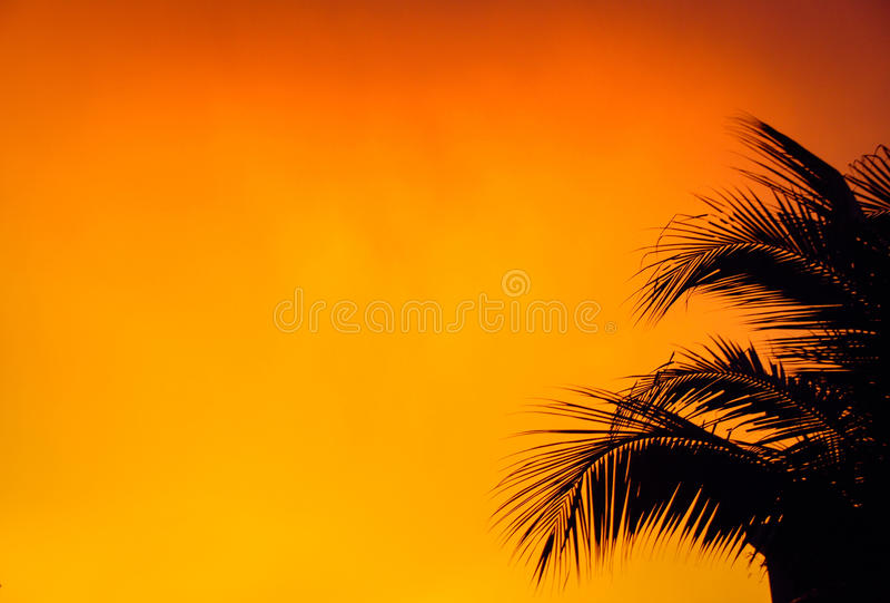 Zwarte bladpalm met oranje achtergrond stock afbeeldingen
