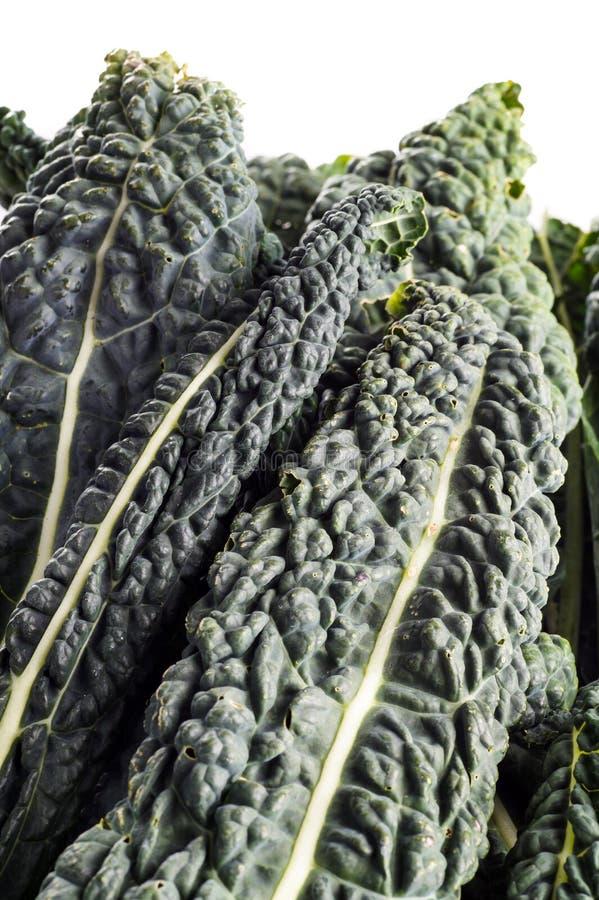 Zwarte boerenkool, Italiaanse boerenkool royalty-vrije stock foto's