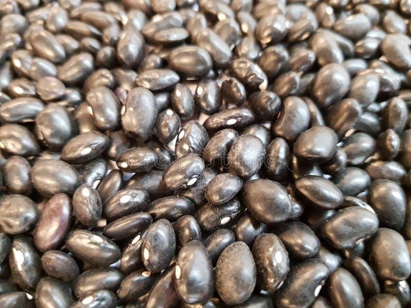 Zwarte bonen stock foto