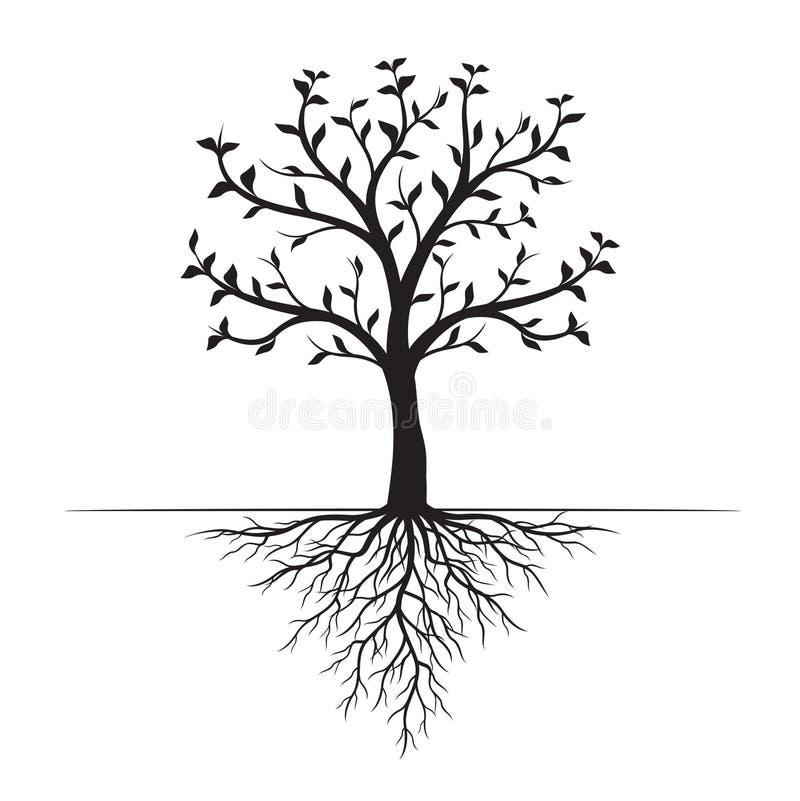 Zwarte Boom met Bladeren en Wortels op witte achtergrond Vector illustratie vector illustratie