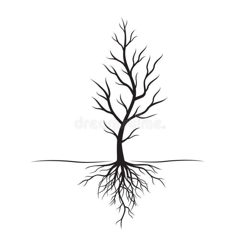Zwarte boom met wortels Vectorillustratie en natuurlijk element