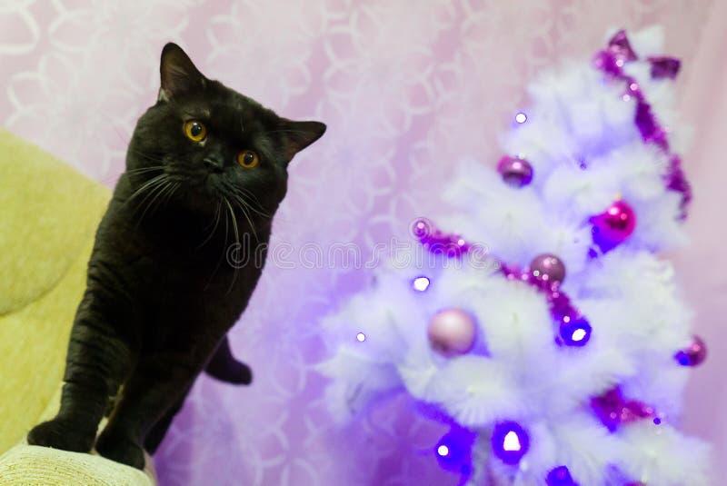 Zwarte Britse kat dichtbij een witte Kerstboom royalty-vrije stock fotografie