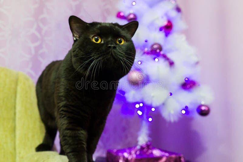 Zwarte Britse kat dichtbij een witte Kerstboom stock foto's