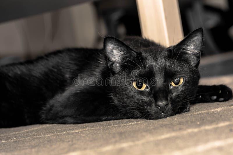 Zwarte Cat Laying Head On The-Vloer royalty-vrije stock foto