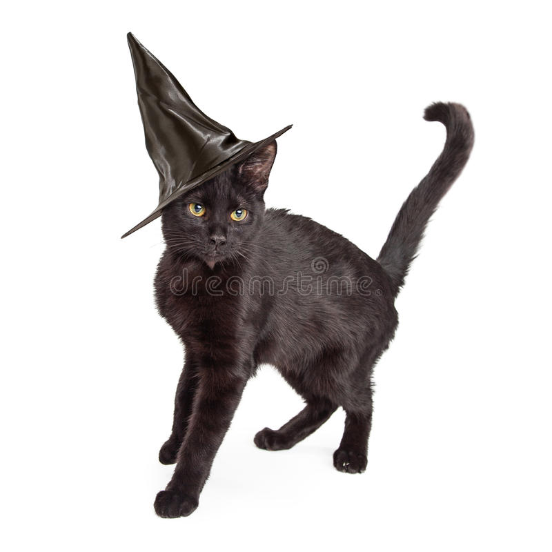 Zwarte Cat Wearing Halloween Witch Hat royalty-vrije stock afbeeldingen