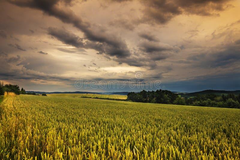 Zwarte chmury i zbożowy pole fotografia stock