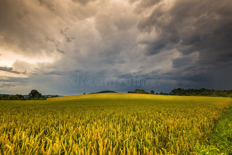 Zwarte chmury i zbożowy pole zdjęcie royalty free
