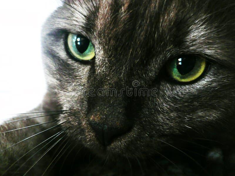 Zwarte Dichte Omhooggaand van de Kat royalty-vrije stock fotografie