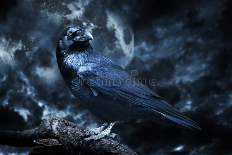 Zwarte die raaf in maanlicht op boom wordt neergestreken royalty-vrije stock foto