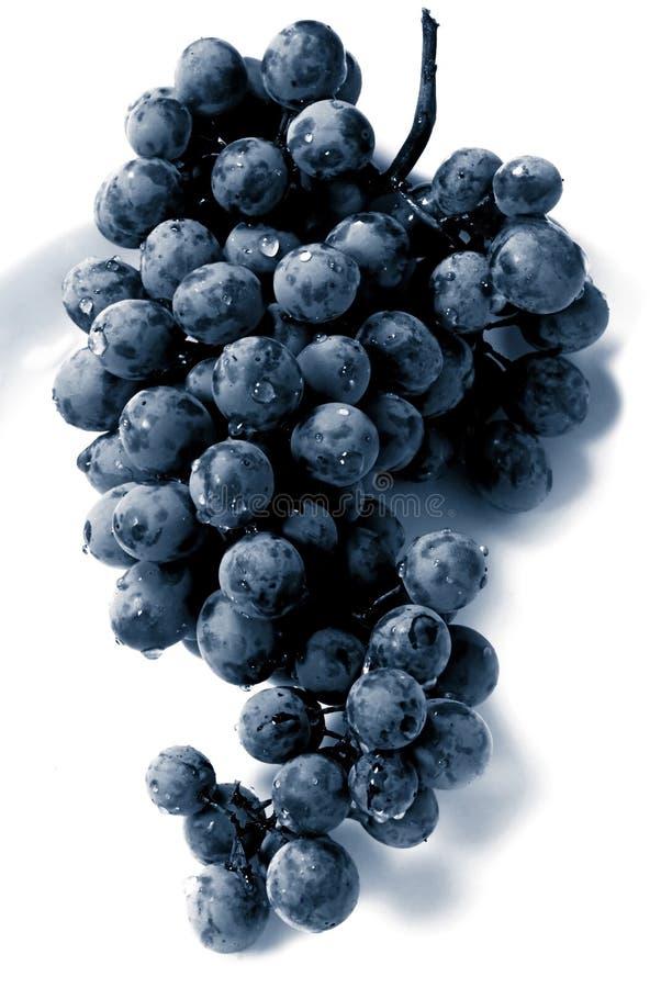 Download Zwarte Druif stock foto. Afbeelding bestaande uit voedsel - 10779982