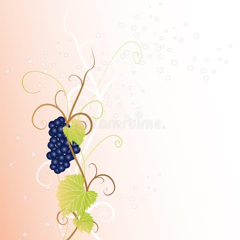 Zwarte druif vector illustratie