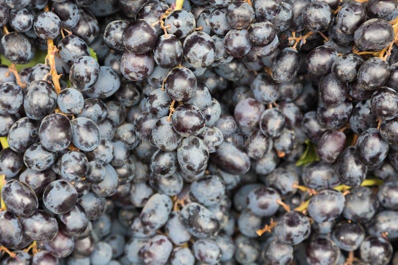 Zwarte druif stock afbeelding