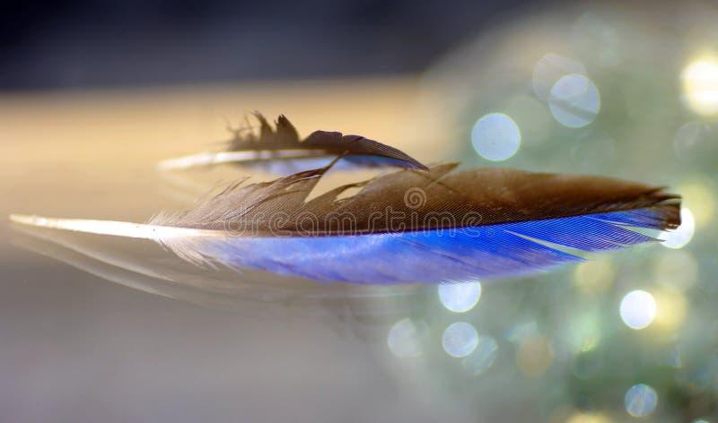 Zwarte en blauwe veer met erachter bokeh royalty-vrije stock foto's