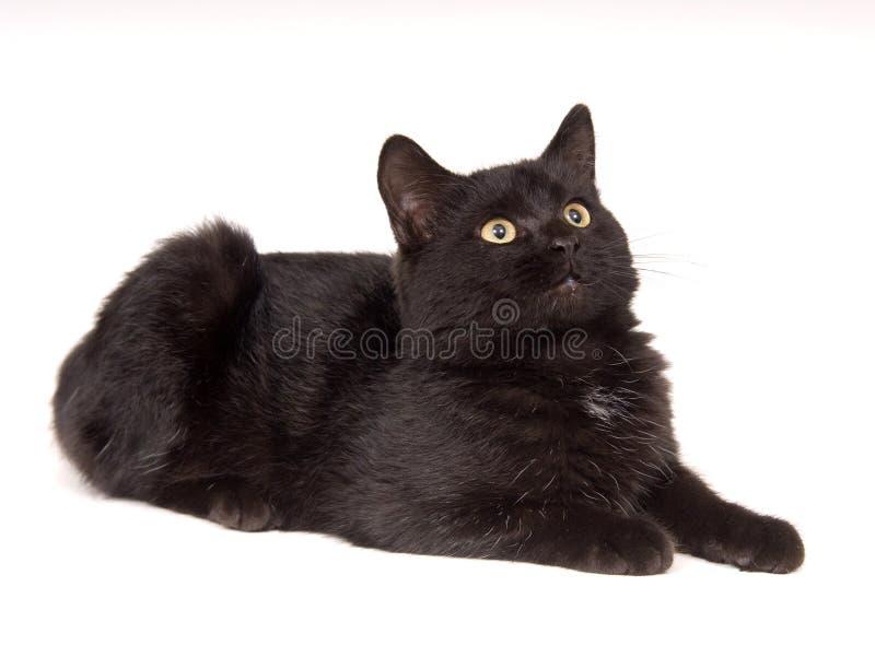 Zwarte en kat die omhoog rust eruit ziet stock afbeelding