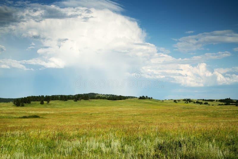 Zwarte Heuvels van Zuid-Dakota royalty-vrije stock fotografie